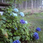 20100807094946.jpg